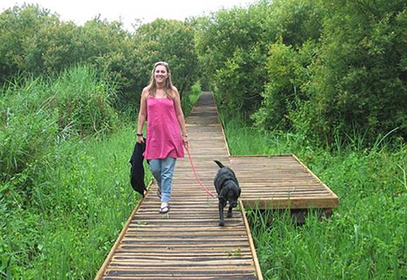 lady walking Labrador over wooden boardwalk in Slapton Ley Devon