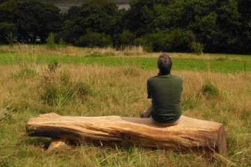 man sitting on carved tree trunk bench looking at view over woods