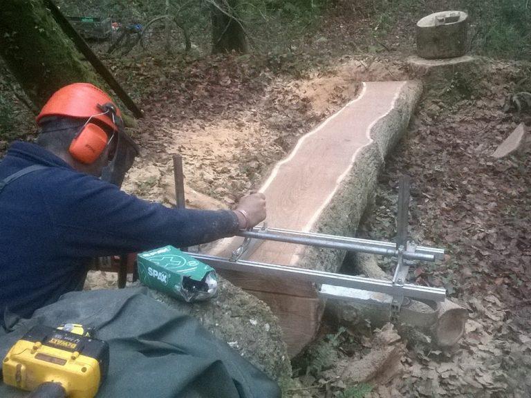 carpenter cutting a tree trunk