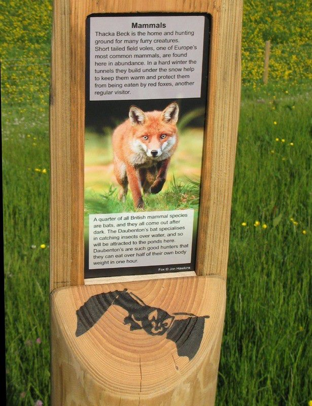 information post with a fox